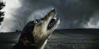 ผี หมาหอน