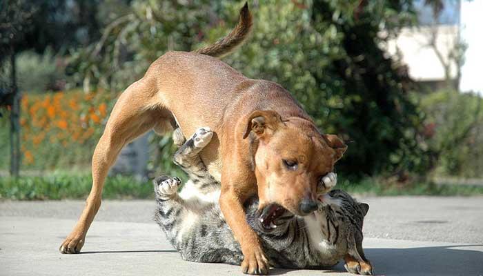 หมาแมว อยู่ร่วมกัน
