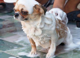 อาบน้ำน้องหมา