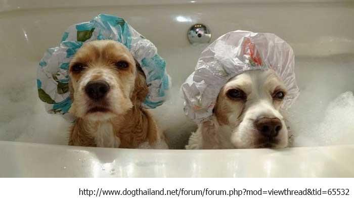 อาบน้ำ น้องหมา