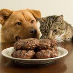 อาหาร หมา แมว ไม่ตรงเวลา