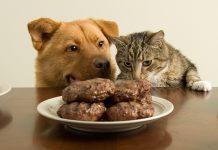 อาหารหมาแมว