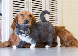 หมาแมว