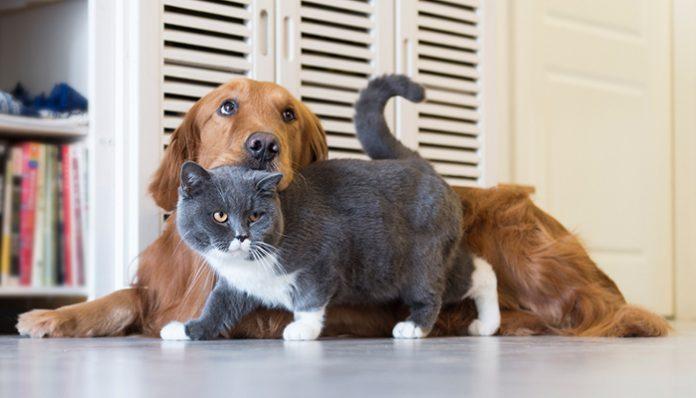 หมา แมว อยู่ร่วมกัน