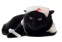พยาบาลแมว