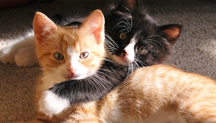 แมว วิธีผูกมิตร