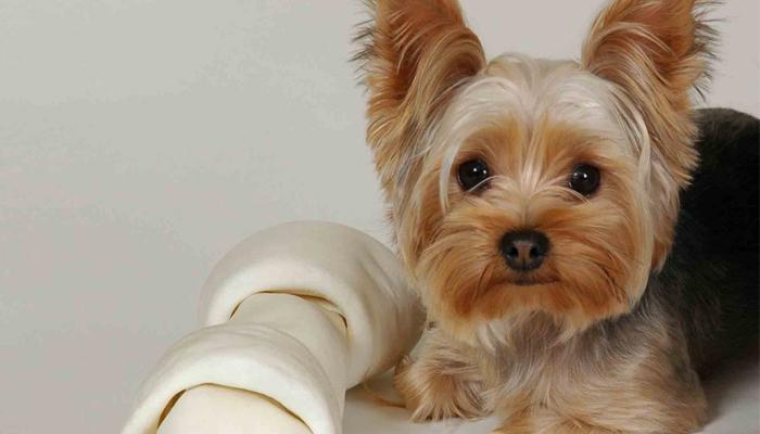โรคข้อเข่าเสื่อม ของสุนัข
