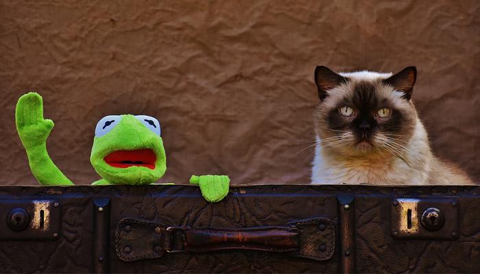แมว หนีออกจากบ้าน