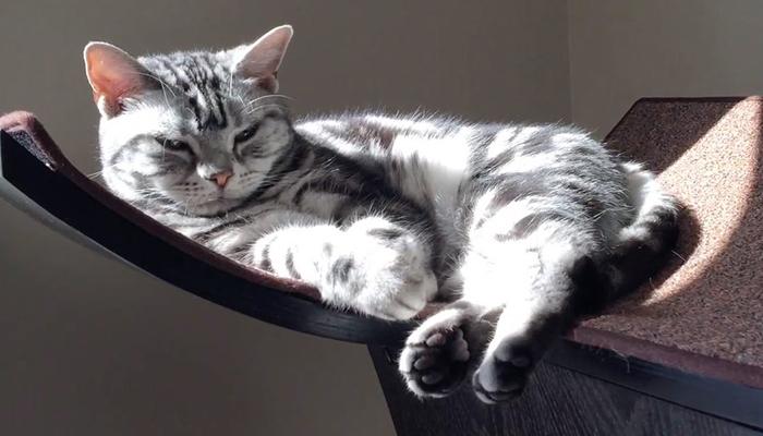 พันธุ์แมว2