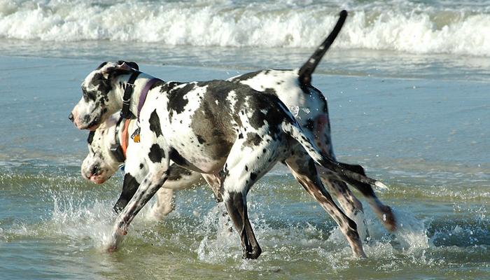 สุนัข สายพันะุ์แปลก