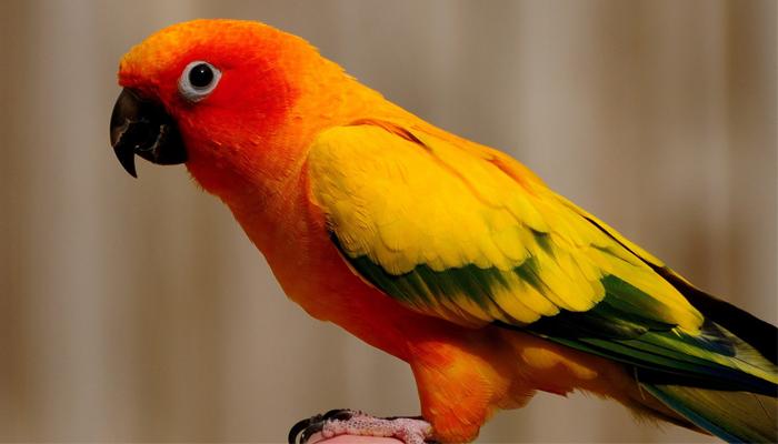 นก เลียนเสียงมนุษย์