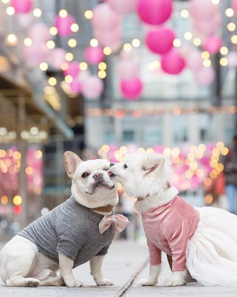 หมาแต่งงาน