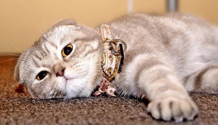 พันธุ์แมว3