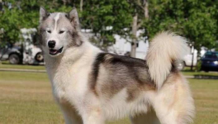 สุนัข ราคาแพงที่สุดในโลก