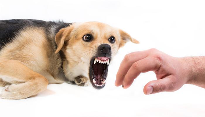 หมากัด