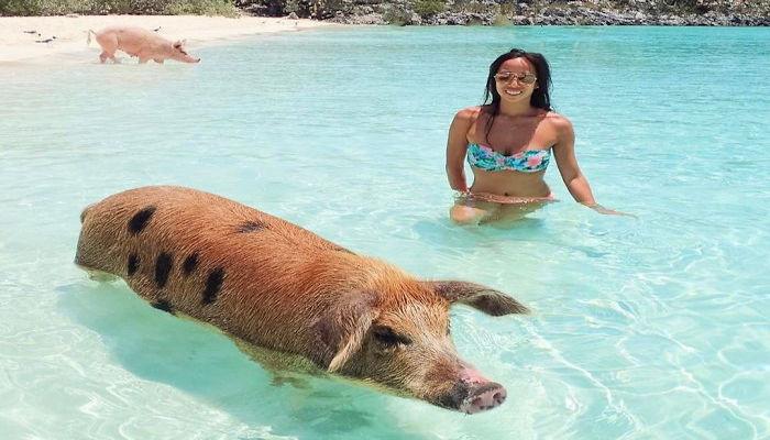 หมูว่ายน้ำ2