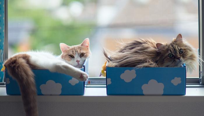 แมว มุดกล่อง
