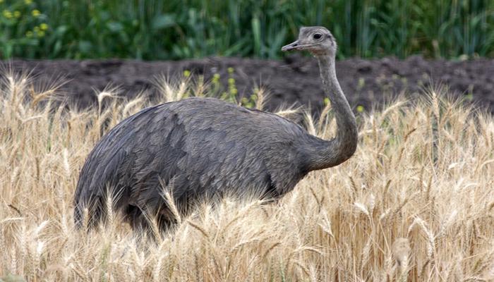 นก ใหญ่ที่สุดในโลก