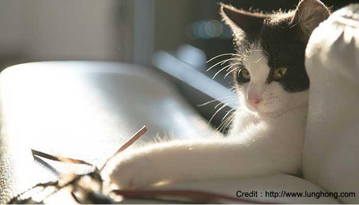 เครียด พฤติกรรม ความเครียด หมาแมว