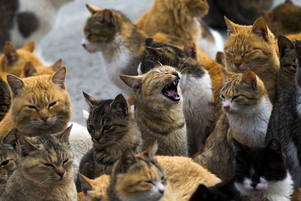 เกาะแมว6
