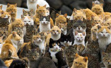 เกาะแมว2