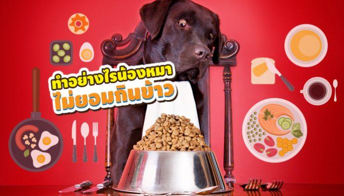สุนัข ไม่กินข้าว เบื่ออาหาร