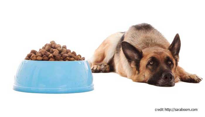 หมา ไม่กินข้าว เบื่ออาหาร