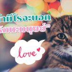 แมว บอกรัก