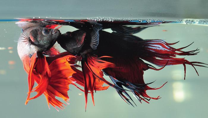 ปลาสวยงาม01