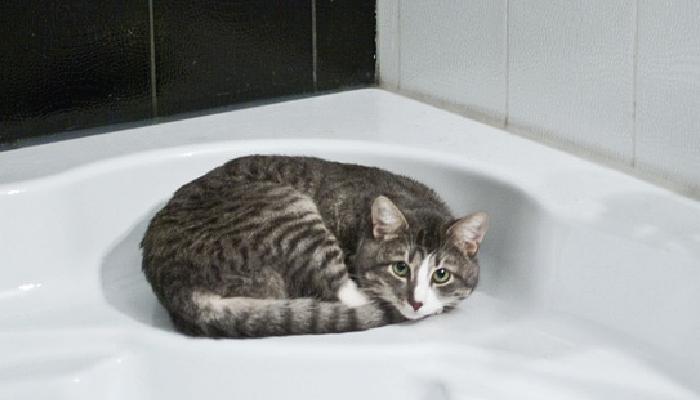 ลูกแมว ย้ายบ้าน