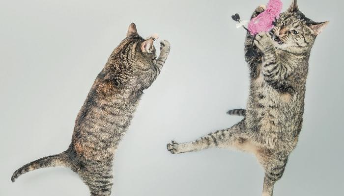 แมว นิสัยแมว