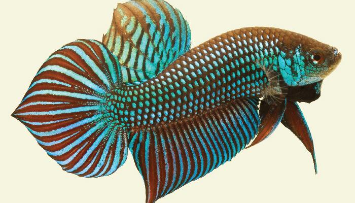 ปลาสวยงาม05