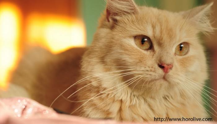 แมว05