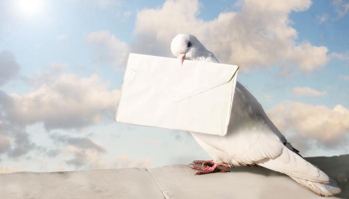 นกพิราบ บุรุษไปรษณีย์