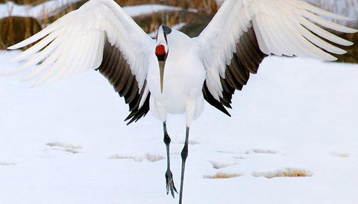 นก พันธุ์แปลก