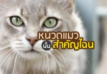 cat_03072017coverpetcitiz