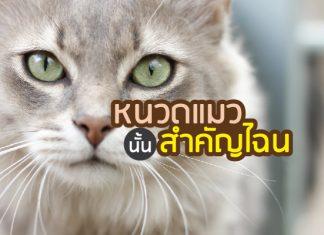 หนวด แมวสำคัญอย่างไร
