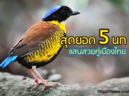 นก สวย เมืองไทย
