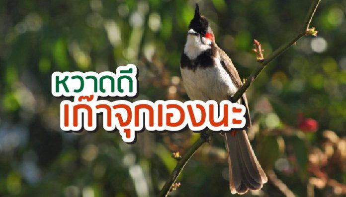 นกกรงหัวจุก วิธีเลี้ยง