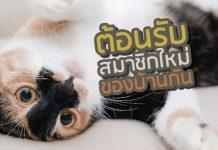ลูกแมวcover