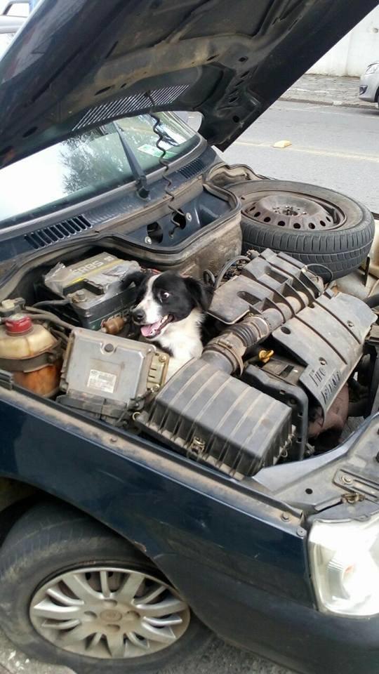 สุนัขในรถยนต์