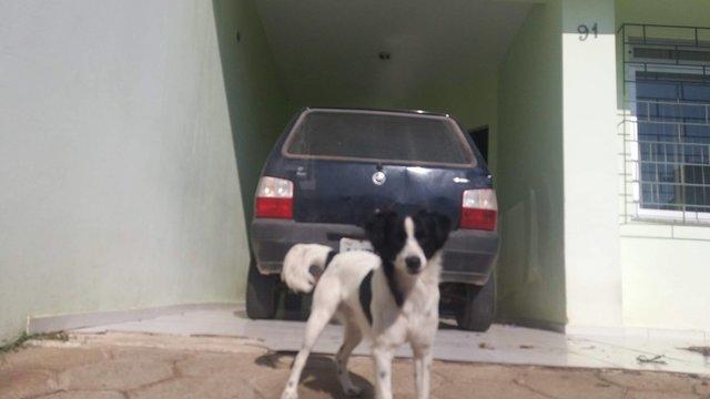 สุนัขในรถยนต์1