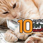 แมว ค่าตัวแพง