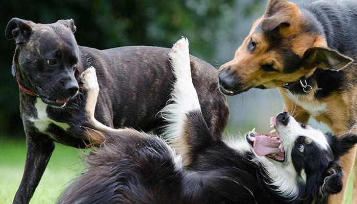 สุนัข เข้าสังคม