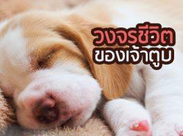หมา วงจรชีวิตแต่ละช่วงวัย