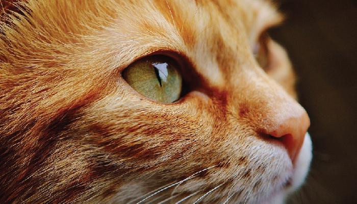 ทาสแมว แมว เตรียมความพร้อมก่อนนำมาเลี้ยง
