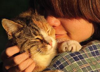 แมว เข้าสังคม
