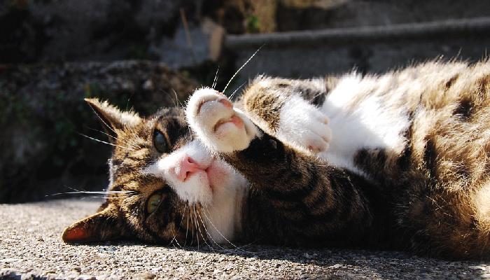 แมว กับวงจรชีวิตของเหล่าทาส