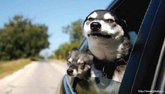 สุนัข เดินทางไกล