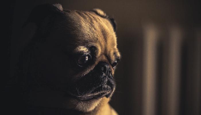 สุนัข กับพฤติกรรมที่บ่งบอกว่าเขาป่วย